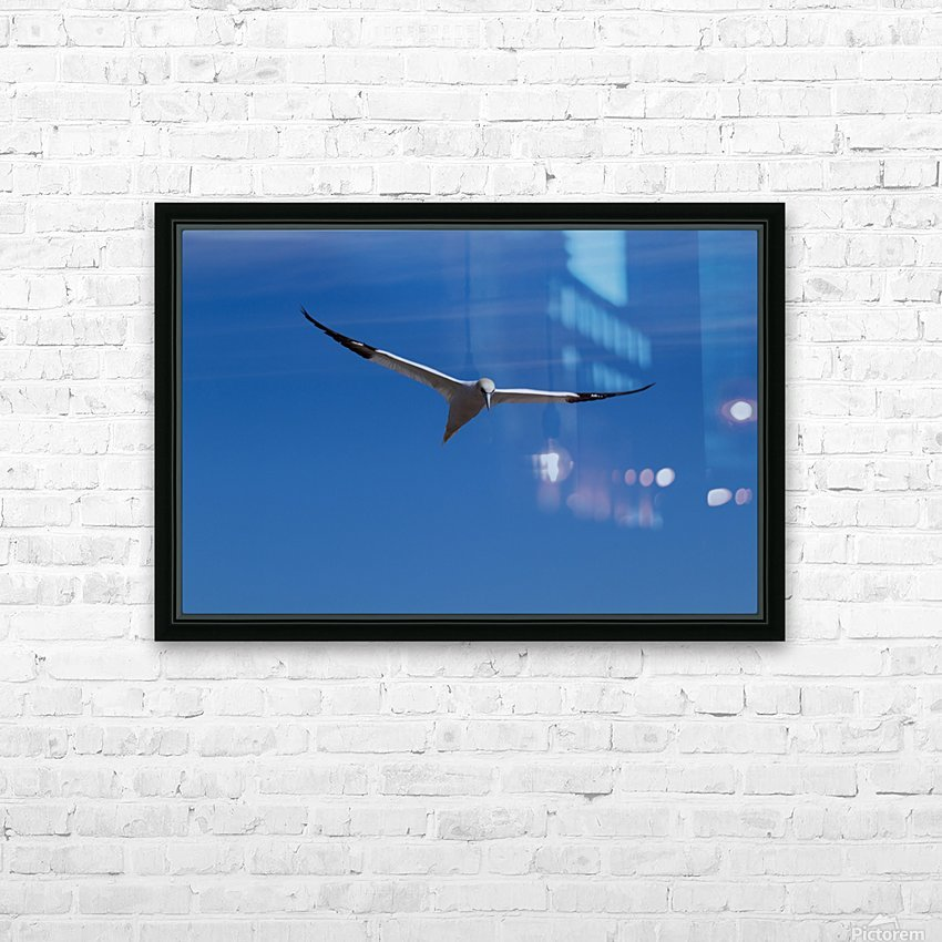 Fou de Bassan HD Sublimation Metal print with Decorating Float Frame (BOX)