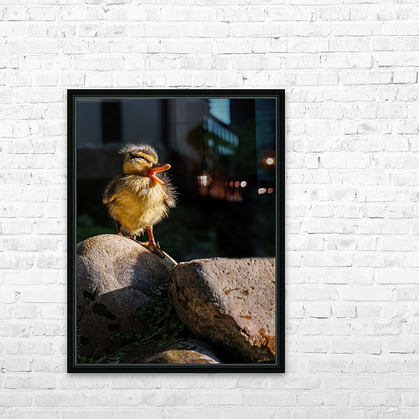 Quacking Duckling HD Sublimation Metal print with Decorating Float Frame (BOX)
