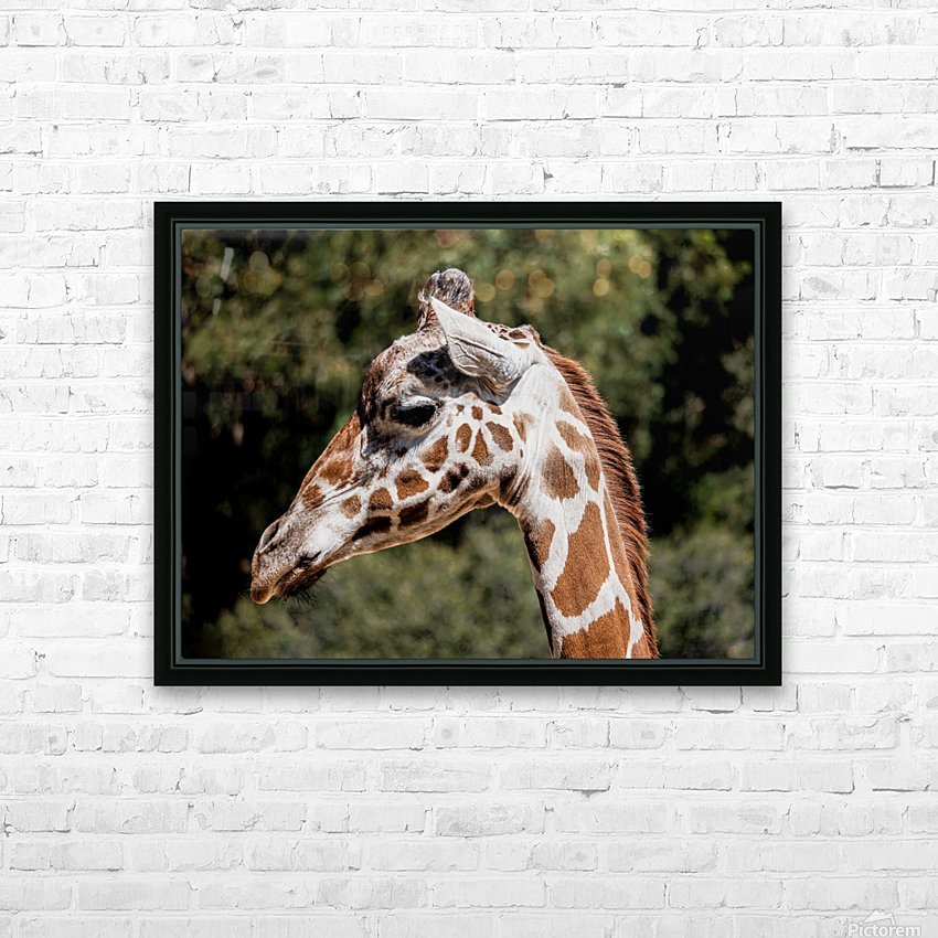 Profile of a Giraffe HD Sublimation Metal print with Decorating Float Frame (BOX)