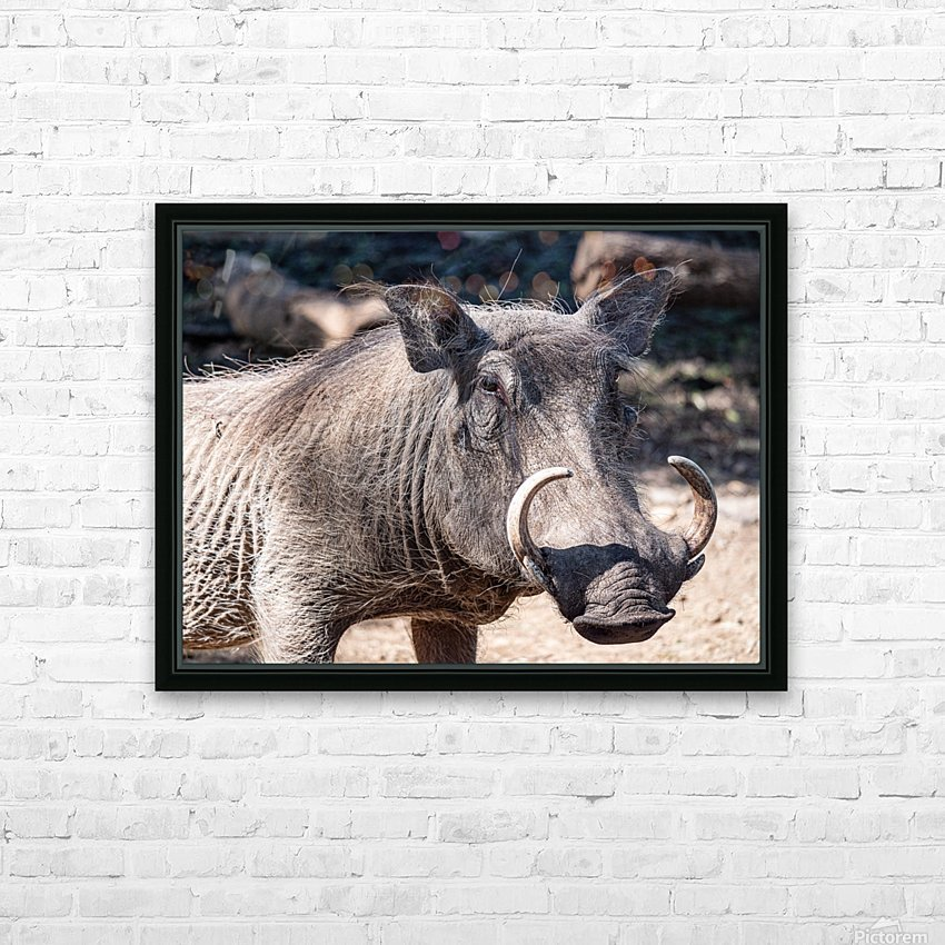 Warthog Close Up HD Sublimation Metal print with Decorating Float Frame (BOX)