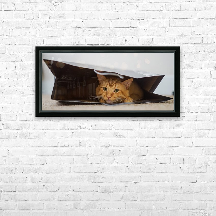 Cat In The Bag HD Sublimation Metal print with Decorating Float Frame (BOX)