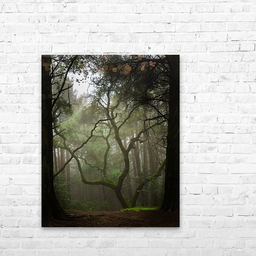 Clearing in the Woods HD Sublimation Metal print with Decorating Float Frame (BOX)