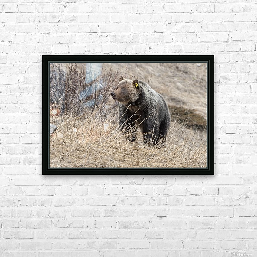 6897 - Grizzly Bear 2160 HD Sublimation Metal print with Decorating Float Frame (BOX)