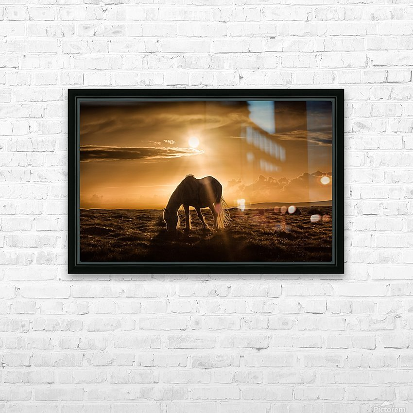 Gower pony at sunset on Cefn Bryn Gower HD Sublimation Metal print with Decorating Float Frame (BOX)