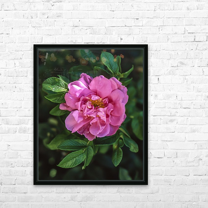 Last Rose of Fall HD Sublimation Metal print with Decorating Float Frame (BOX)