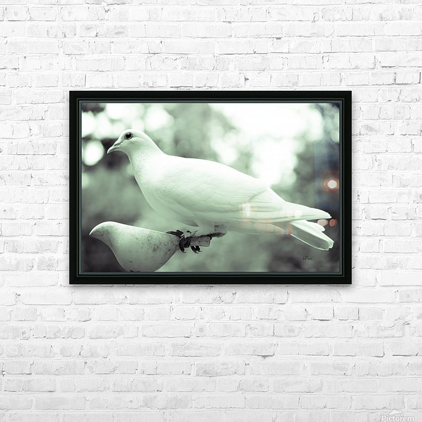 Dove enjoying a meal HD Sublimation Metal print with Decorating Float Frame (BOX)