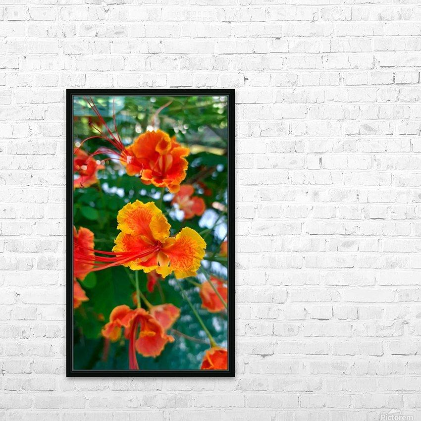 Orange gumamela HD Sublimation Metal print with Decorating Float Frame (BOX)