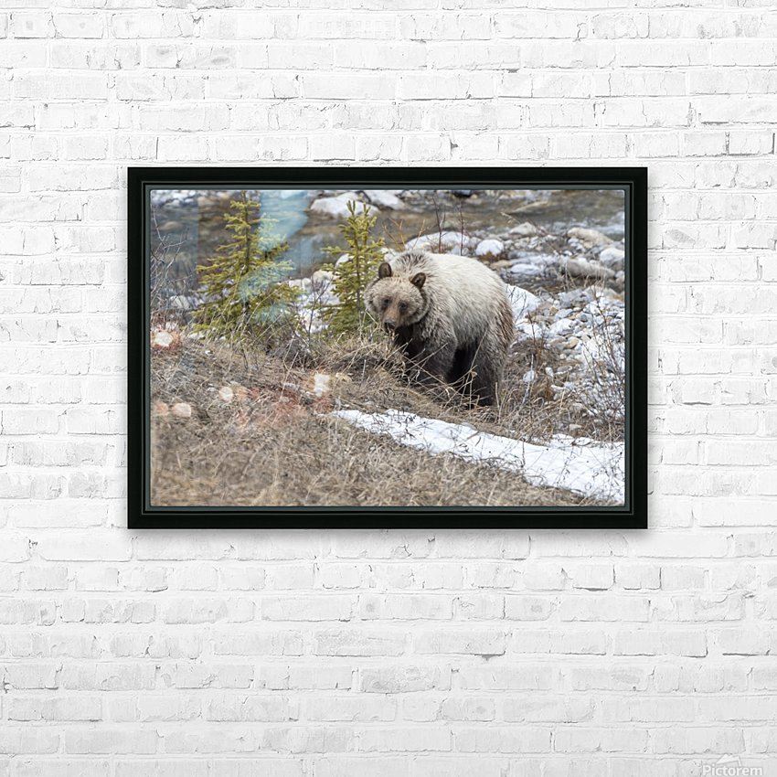 6944 - Grizzly Bear HD Sublimation Metal print with Decorating Float Frame (BOX)