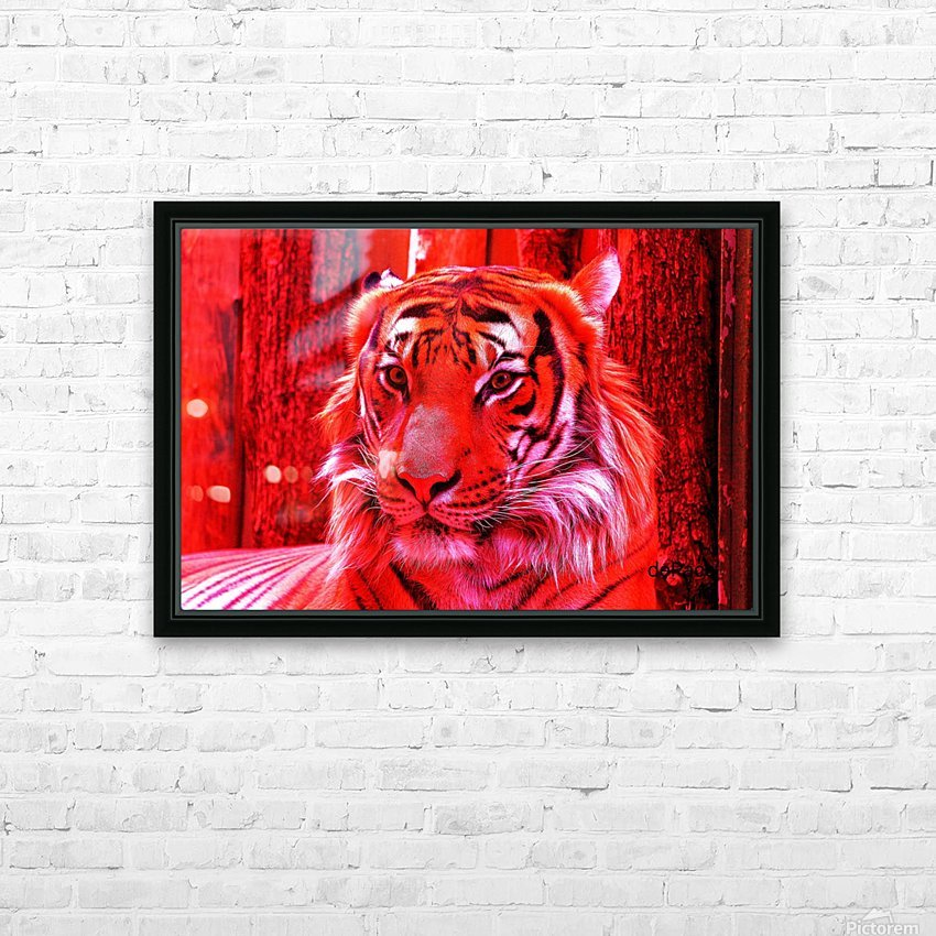 Rare Red Tiger HD Sublimation Metal print with Decorating Float Frame (BOX)