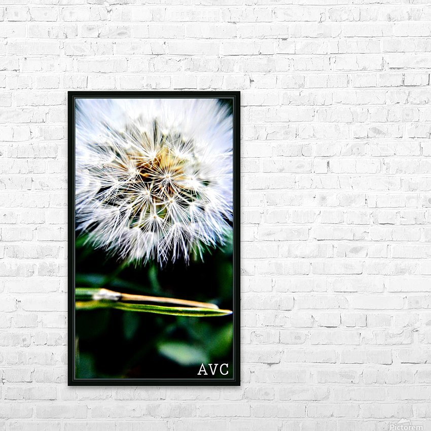 Dandelion Fluff HD Sublimation Metal print with Decorating Float Frame (BOX)