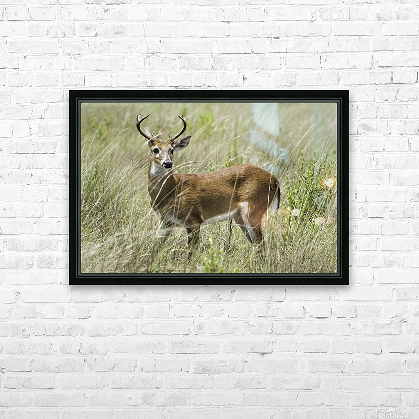 White Tailed Dear HD Sublimation Metal print with Decorating Float Frame (BOX)