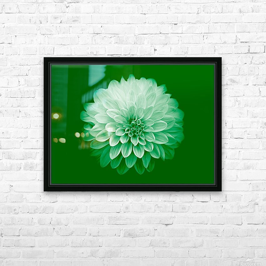 Dahlia on Green HD Sublimation Metal print with Decorating Float Frame (BOX)
