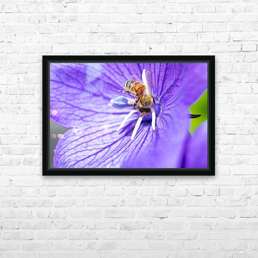 Pollinating Bee HD Sublimation Metal print with Decorating Float Frame (BOX)