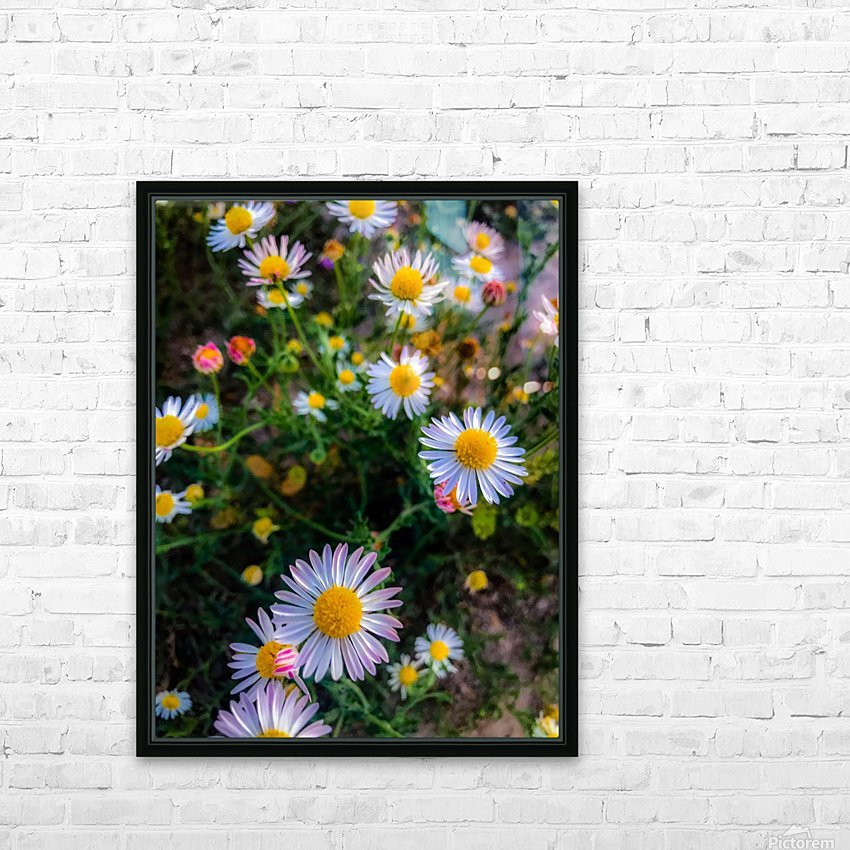 Daisies in Brackettville TX  HD Sublimation Metal print with Decorating Float Frame (BOX)