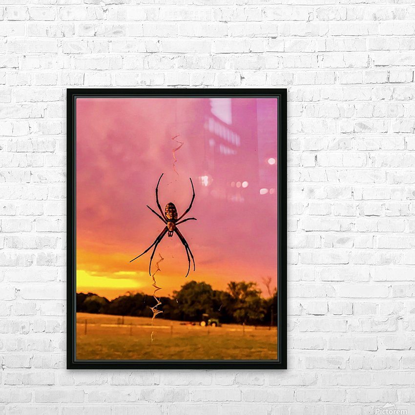 Banana Spider in Cat Spring TX HD Sublimation Metal print with Decorating Float Frame (BOX)