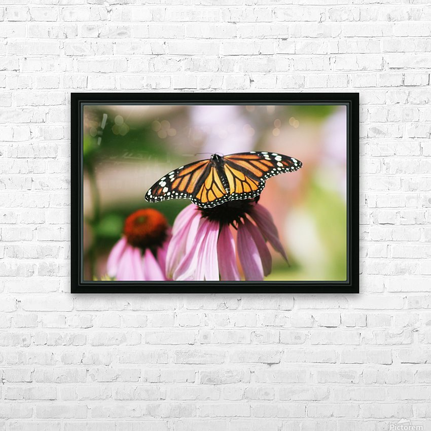 Closeup Butterfly on Cone Flower HD Sublimation Metal print with Decorating Float Frame (BOX)
