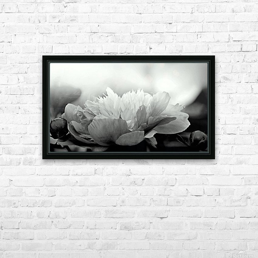 Heavenly Peony Black and White HD Sublimation Metal print with Decorating Float Frame (BOX)