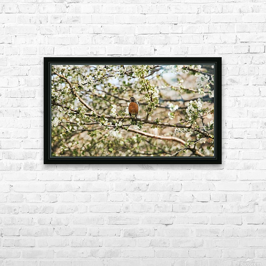 Robin Sitting on Branch HD Sublimation Metal print with Decorating Float Frame (BOX)