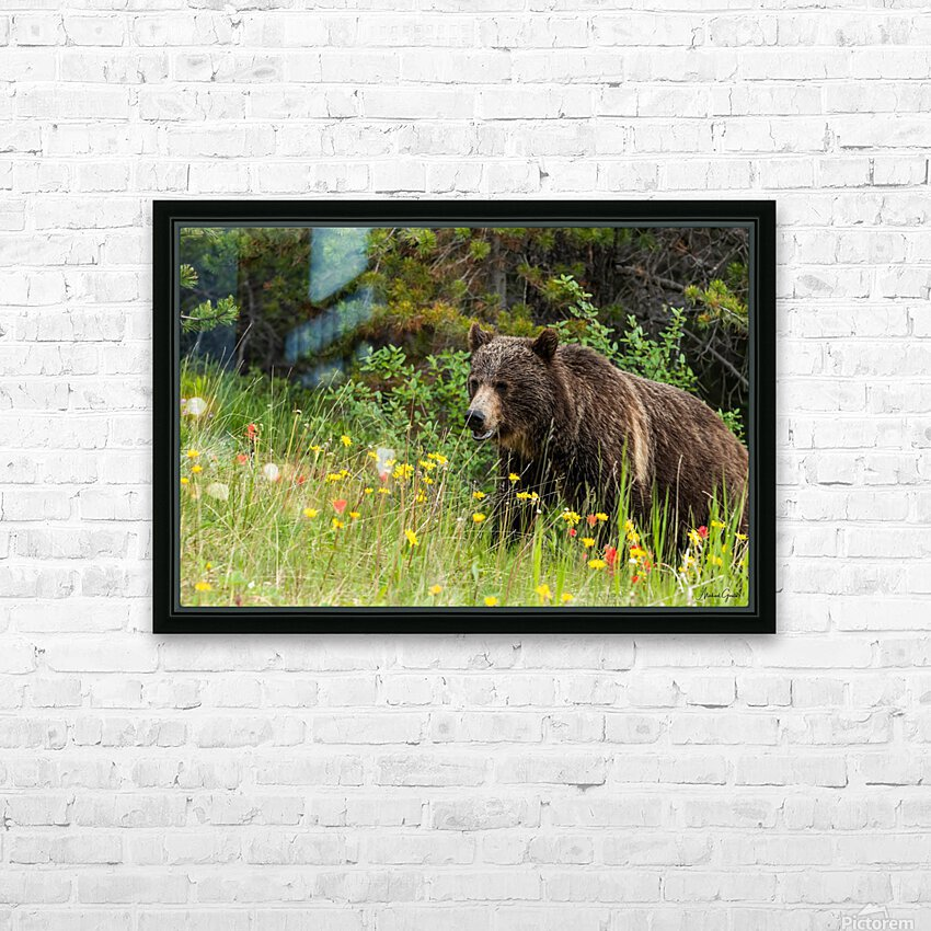 Grizzly Bear Sow 142  IMG_5130 HD Sublimation Metal print with Decorating Float Frame (BOX)