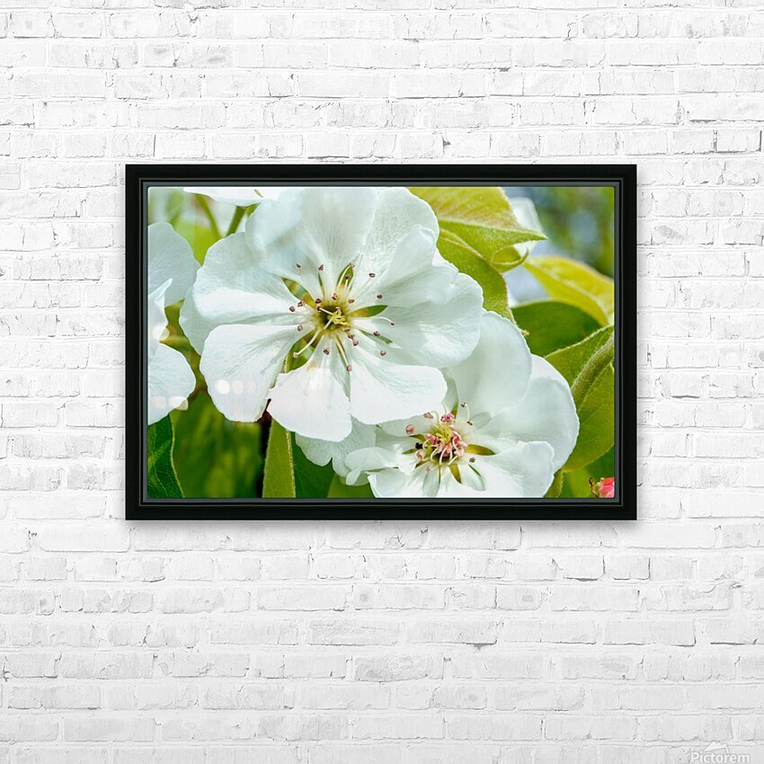 Pear Blossom - No. 1 HD Sublimation Metal print with Decorating Float Frame (BOX)