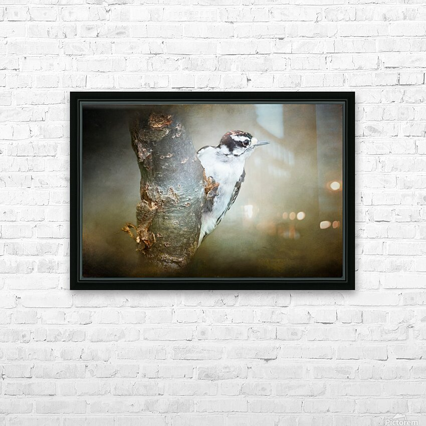 Juvenile male Downy Woodpecker HD Sublimation Metal print with Decorating Float Frame (BOX)