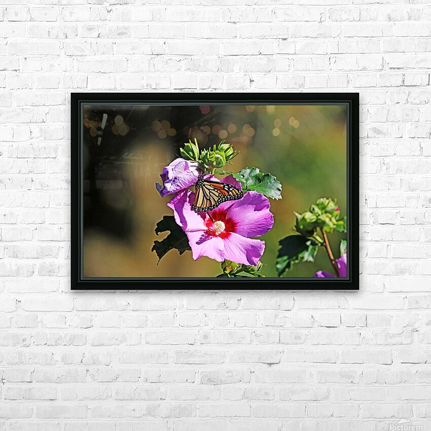 Monarch And Rose Of Sharon HD Sublimation Metal print with Decorating Float Frame (BOX)