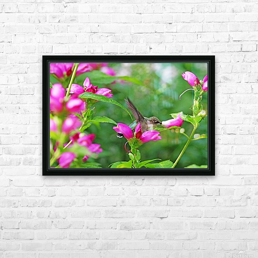 The Lure Of The Pink Turtlehead HD Sublimation Metal print with Decorating Float Frame (BOX)