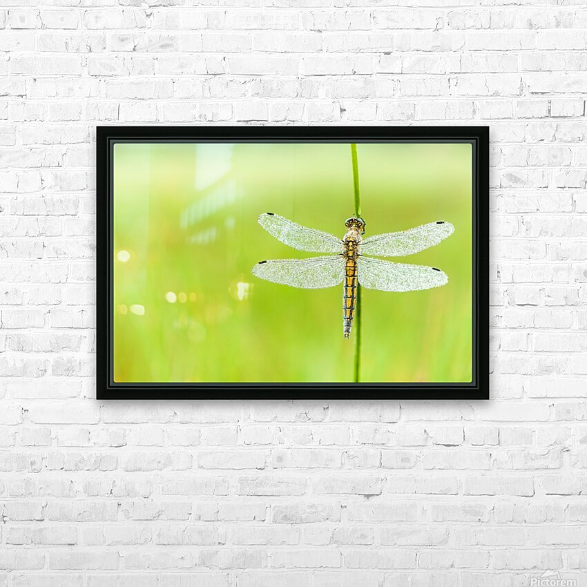 An Fire dragonfly HD Sublimation Metal print with Decorating Float Frame (BOX)