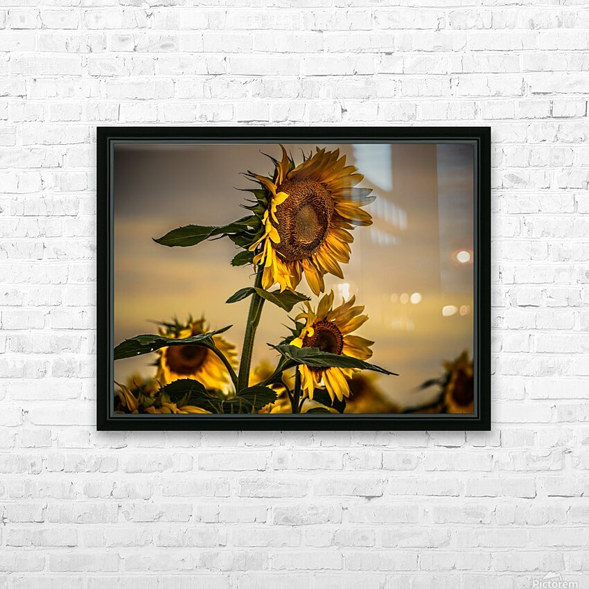 Gone with the Sunflowers HD Sublimation Metal print with Decorating Float Frame (BOX)