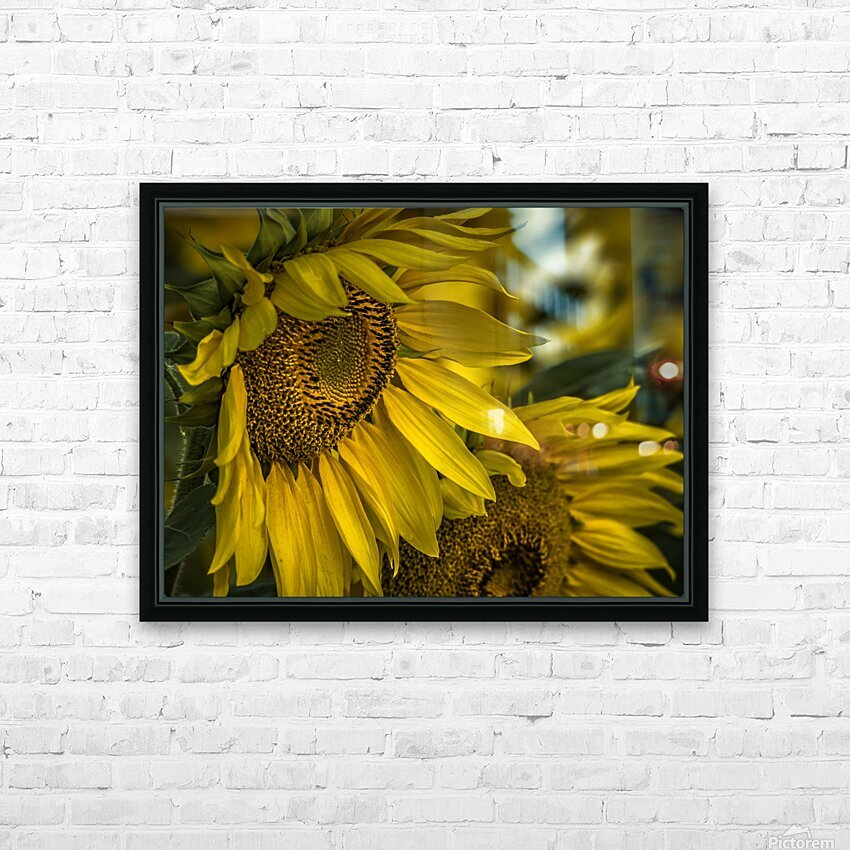 Sunflower Dawn  HD Sublimation Metal print with Decorating Float Frame (BOX)