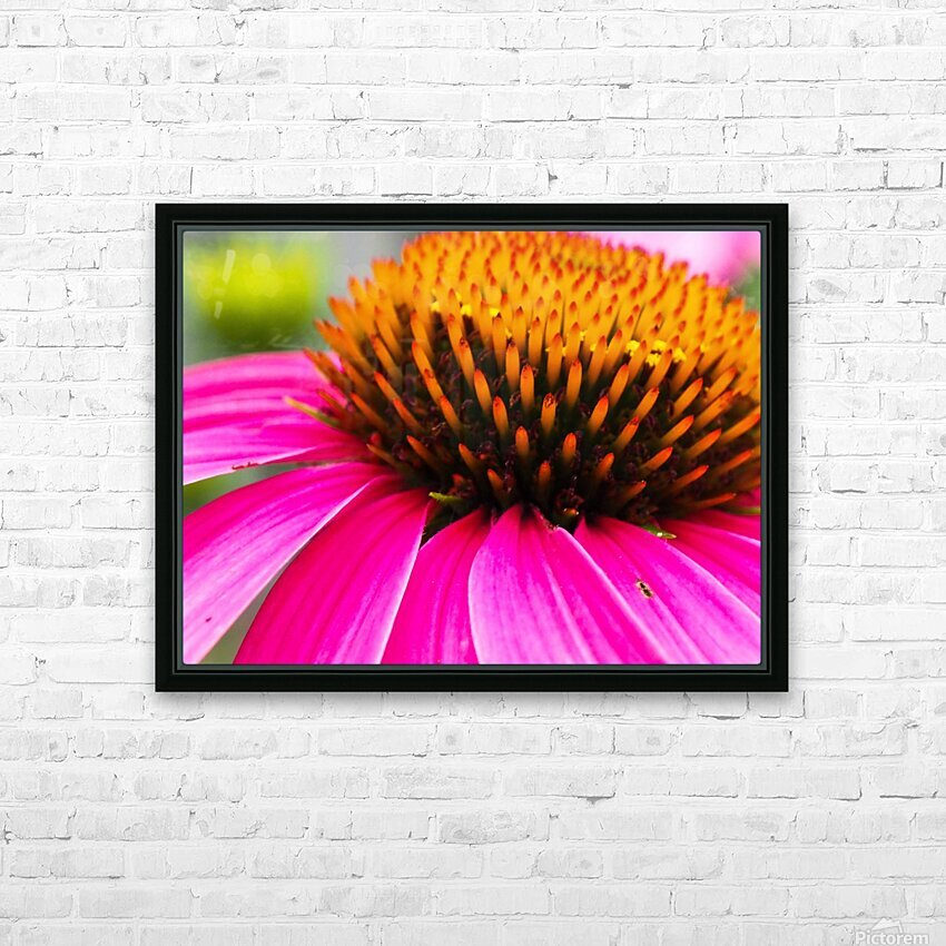 Cone Flower HD Sublimation Metal print with Decorating Float Frame (BOX)