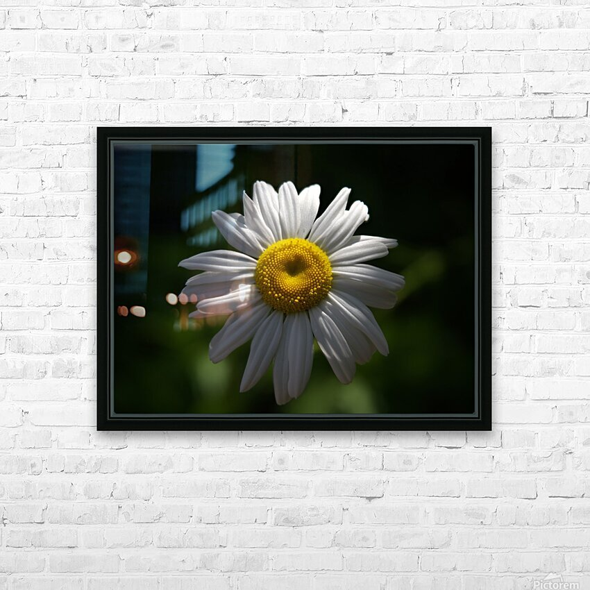 marguerite HD Sublimation Metal print with Decorating Float Frame (BOX)