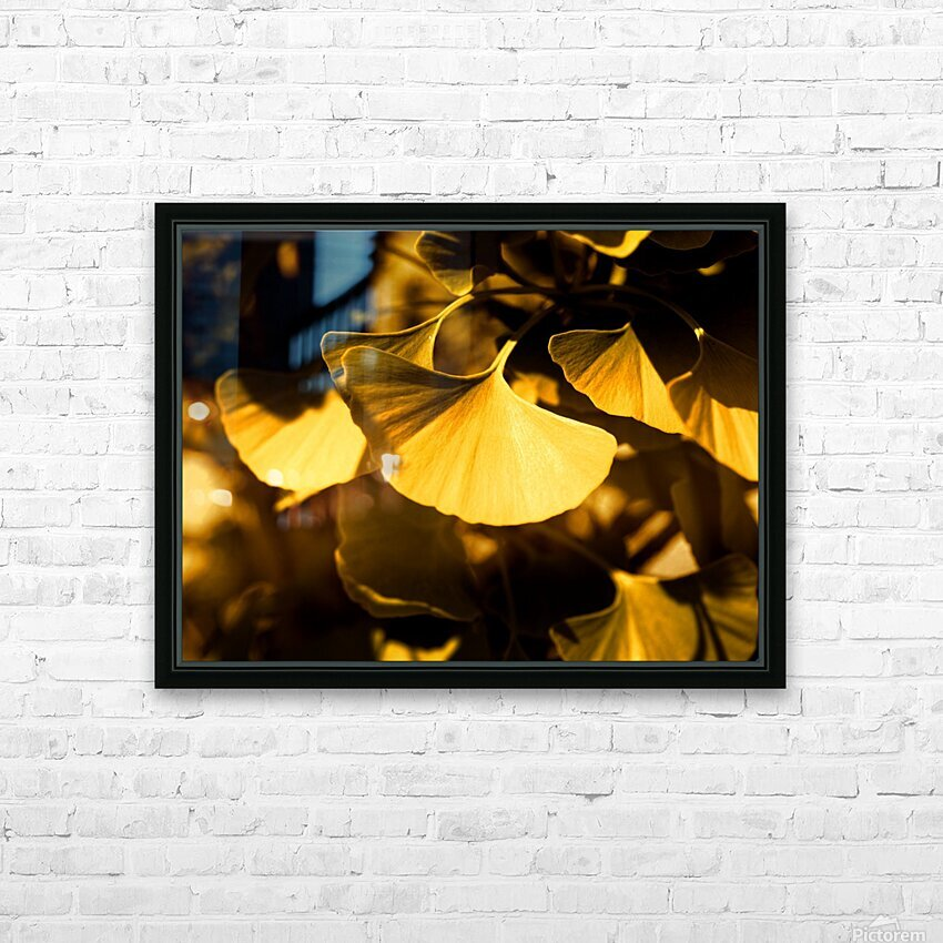 Ginkgo HD Sublimation Metal print with Decorating Float Frame (BOX)
