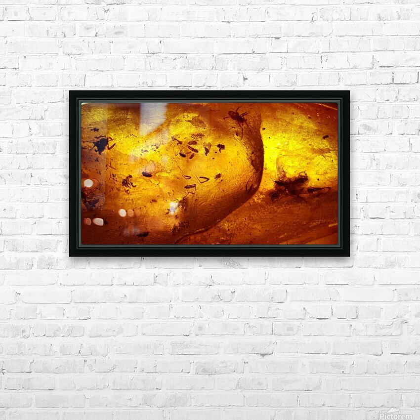 Ancient Insects Trapped in Amber HD Sublimation Metal print with Decorating Float Frame (BOX)