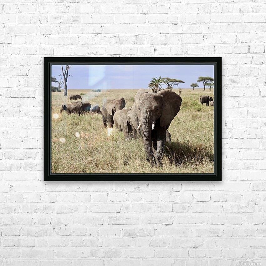 Follow the Leader HD Sublimation Metal print with Decorating Float Frame (BOX)