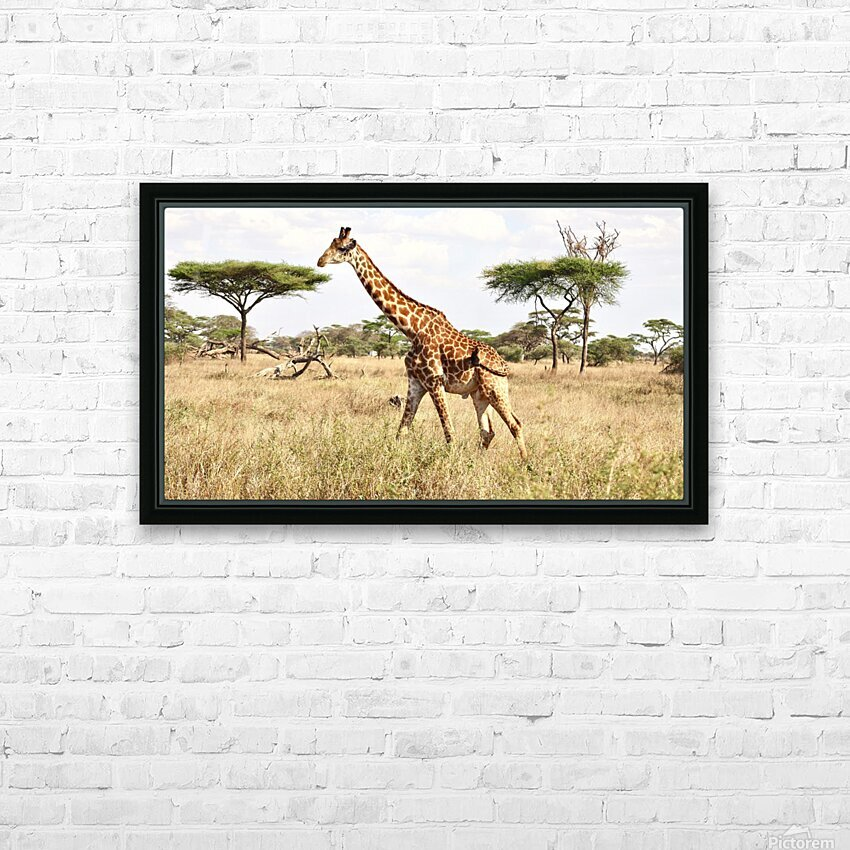 Giraffe HD Sublimation Metal print with Decorating Float Frame (BOX)