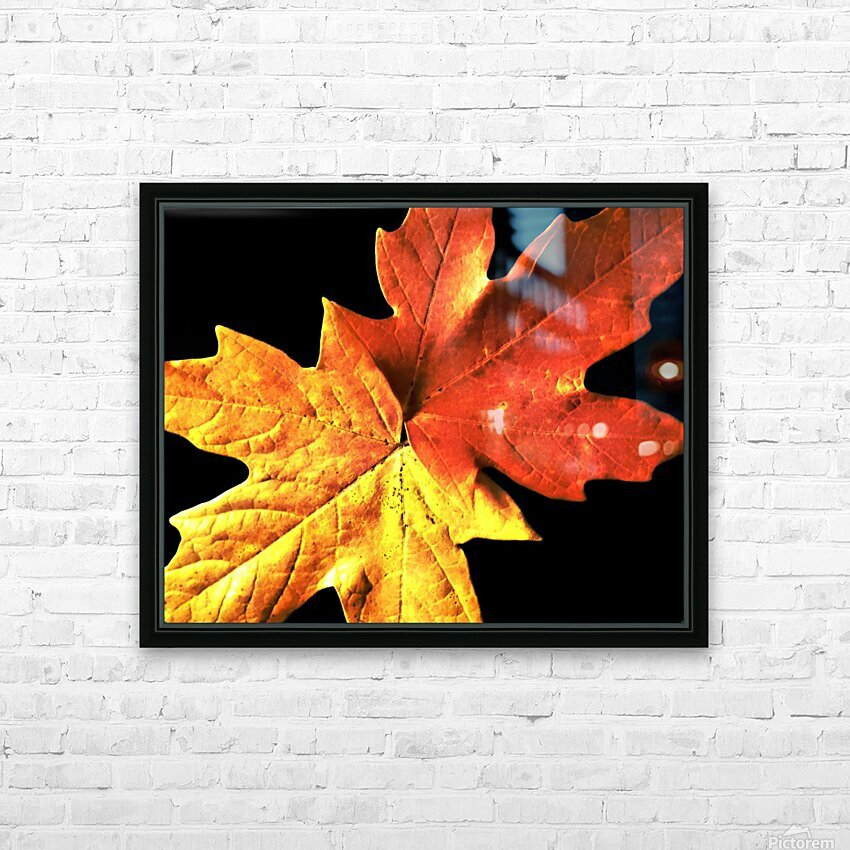 Fall Maple Leaves 3 HD Sublimation Metal print with Decorating Float Frame (BOX)