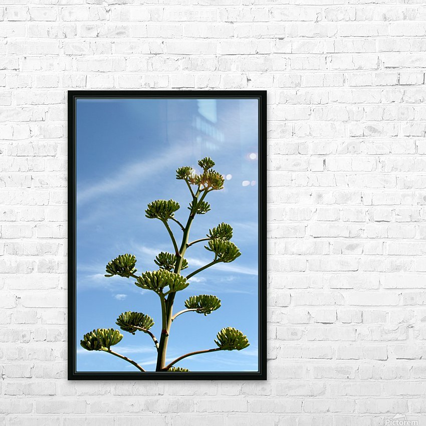 Cacti Mundo 01 HD Sublimation Metal print with Decorating Float Frame (BOX)