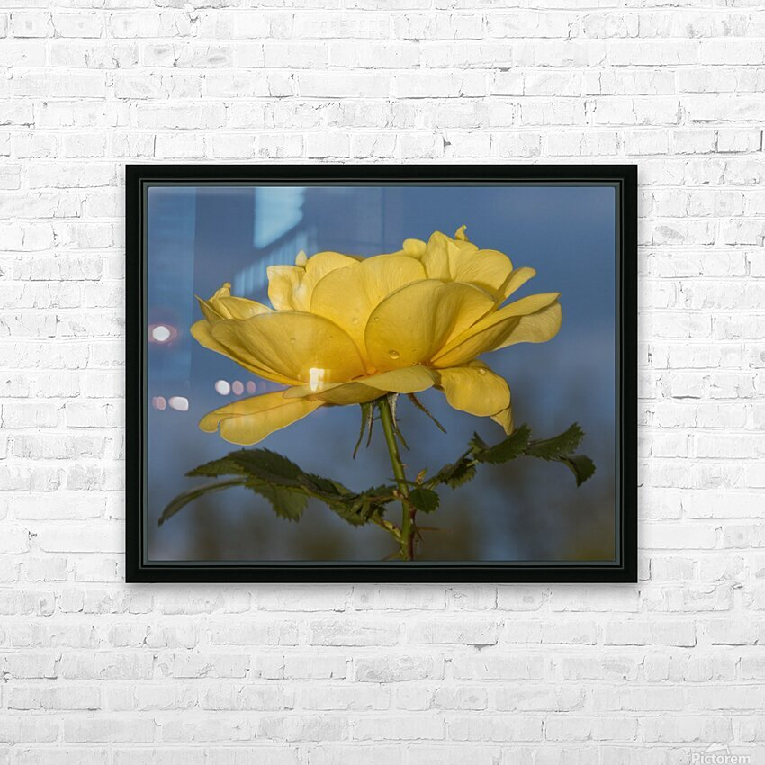 Yellow Rose Landscape HD Sublimation Metal print with Decorating Float Frame (BOX)