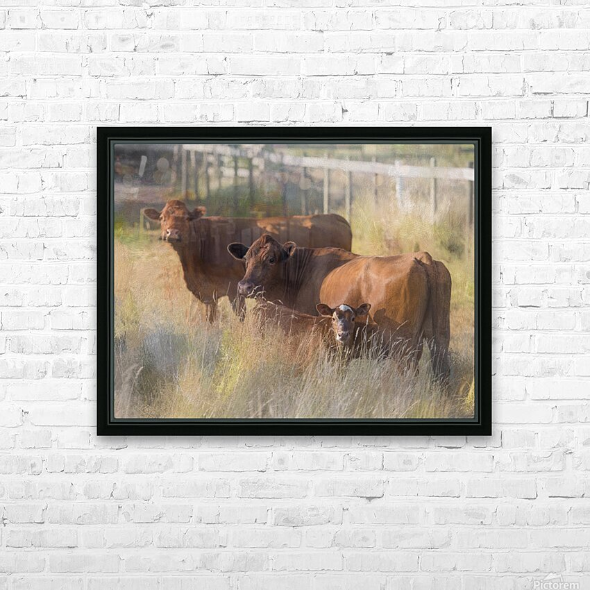 Three Cows  HD Sublimation Metal print with Decorating Float Frame (BOX)