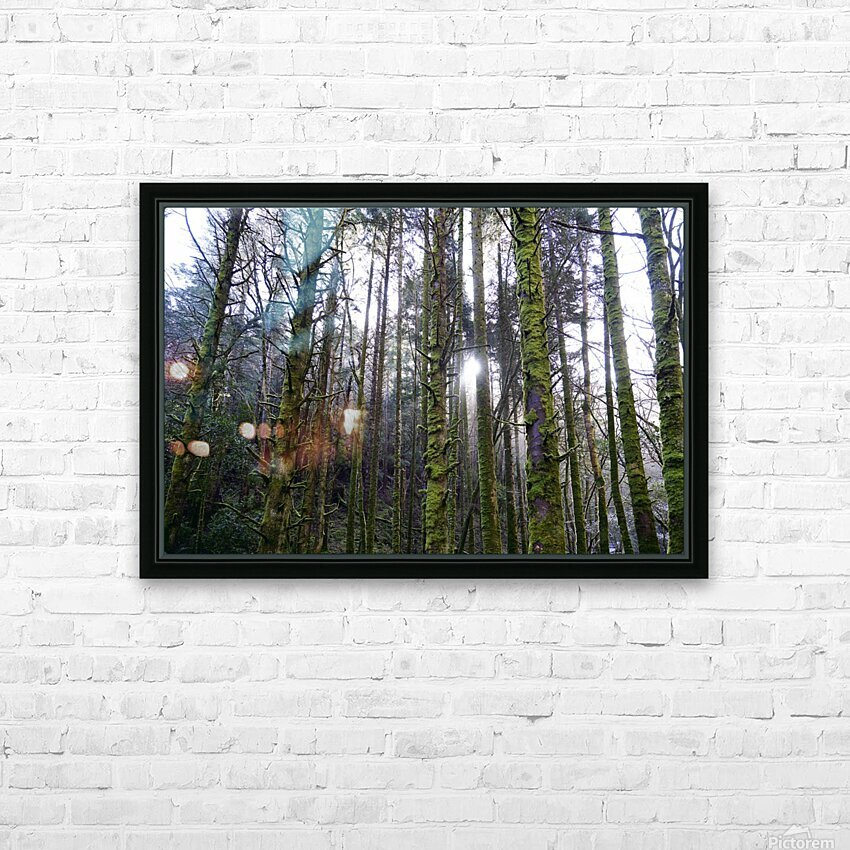 Trees of the Killarney National Park Co. kerry Ireland Europe 2018 HD Sublimation Metal print with Decorating Float Frame (BOX)