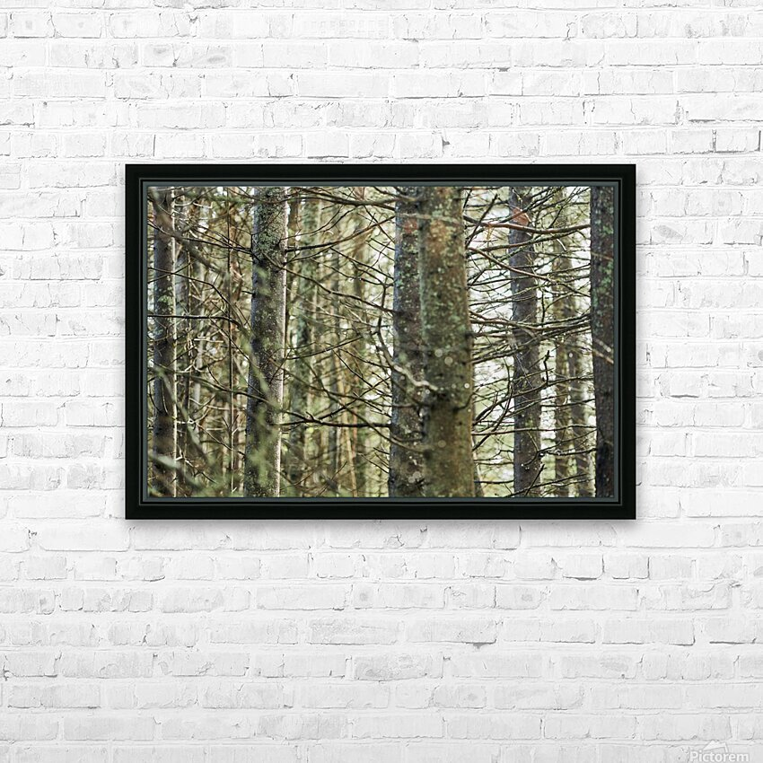 Trees in forest Mauricie National Park Quebec Canada HD Sublimation Metal print with Decorating Float Frame (BOX)