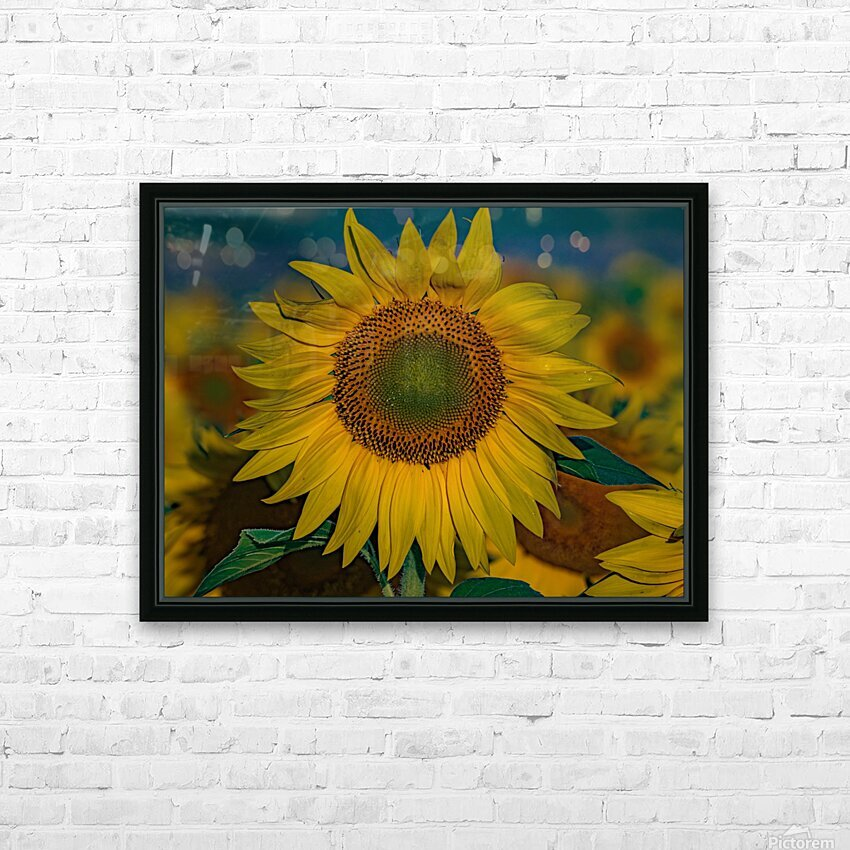 When Sunny Gets Blue HD Sublimation Metal print with Decorating Float Frame (BOX)