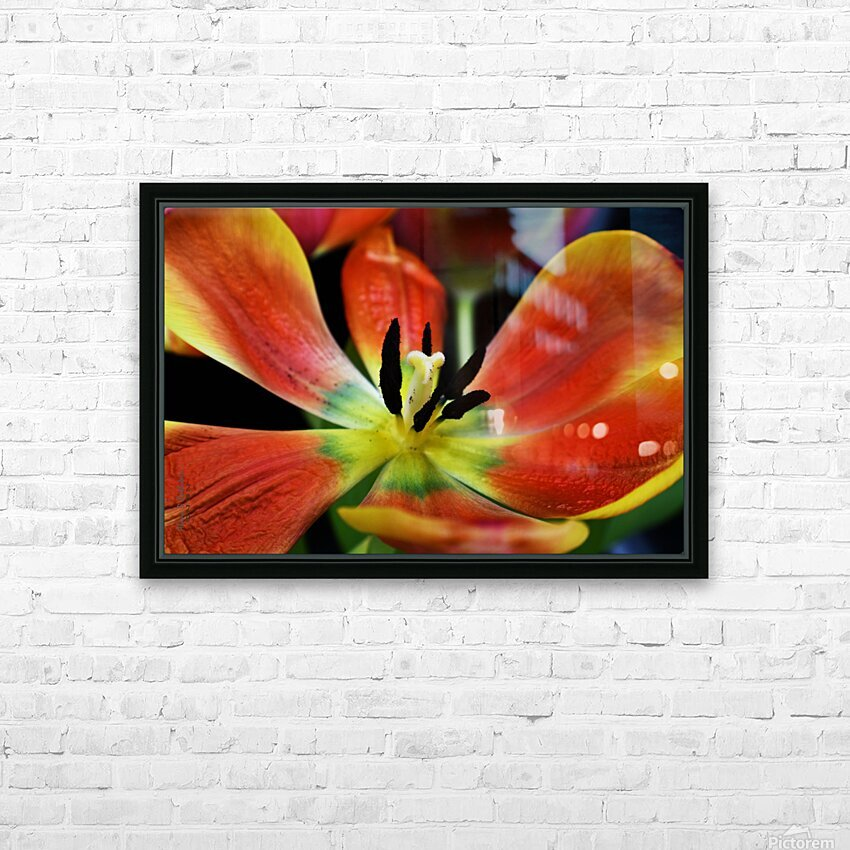 Tulip 2 HD Sublimation Metal print with Decorating Float Frame (BOX)