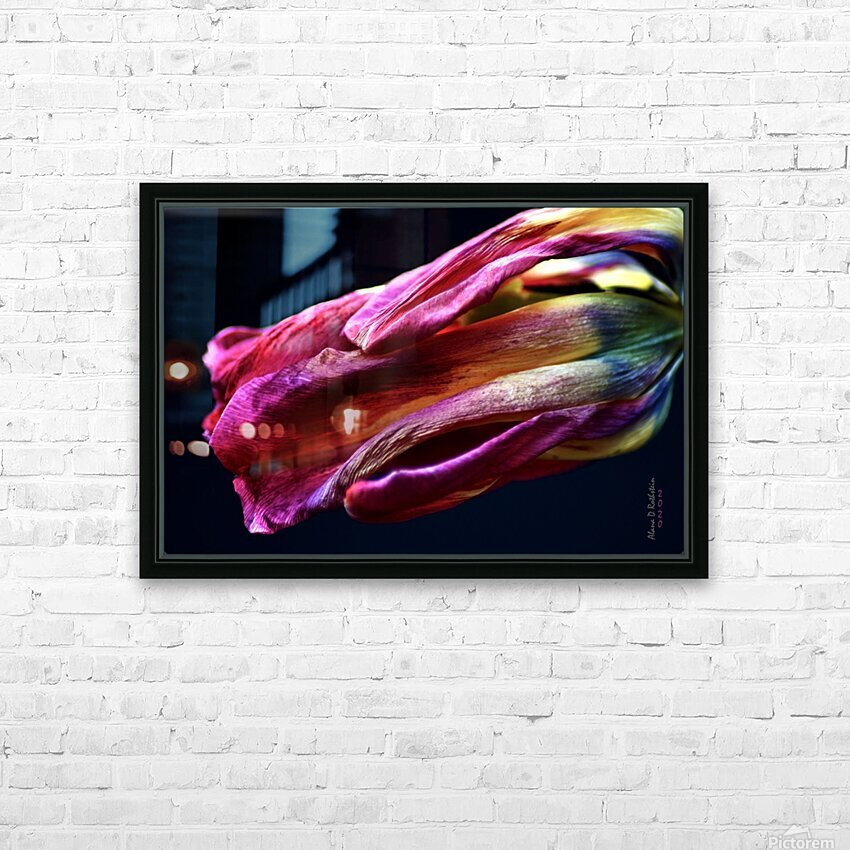 Tulip 3 HD Sublimation Metal print with Decorating Float Frame (BOX)