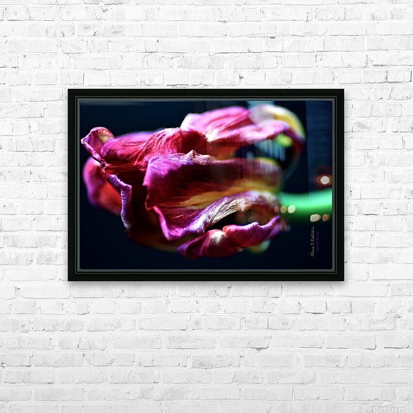 Tulip 5 HD Sublimation Metal print with Decorating Float Frame (BOX)