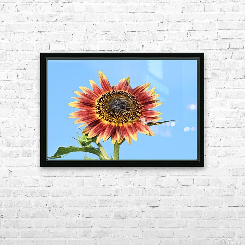 outstretched HD Sublimation Metal print with Decorating Float Frame (BOX)