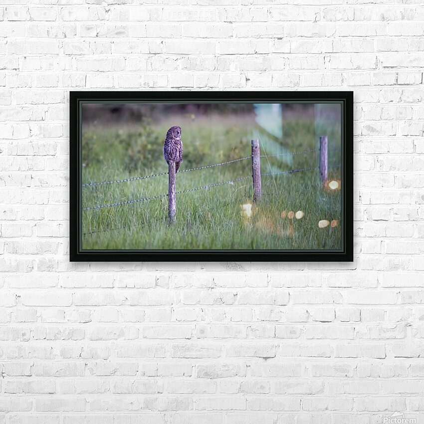 0077 - Great Grey Owl Fence Line Hunter HD Sublimation Metal print with Decorating Float Frame (BOX)