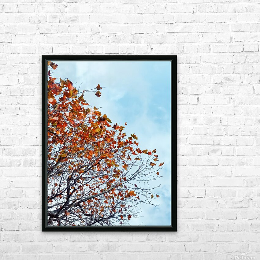 Tree branch with orange autumn leaves and blue cloudy sky HD Sublimation Metal print with Decorating Float Frame (BOX)