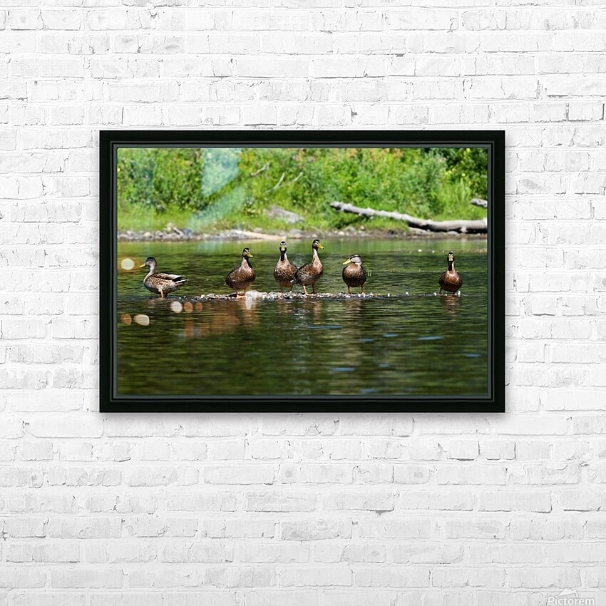 What the duck HD Sublimation Metal print with Decorating Float Frame (BOX)